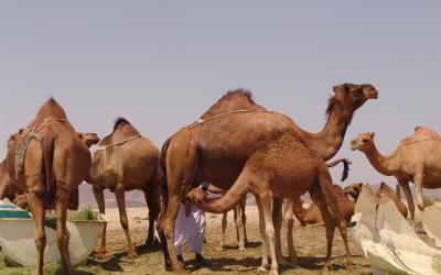 沙特公司注册指南:普通注册程序